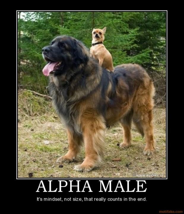 alpha-male
