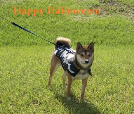 Isabella, my Skele-pup wishing you a Spooktakular Halloween